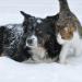 Thumbnail for National Pet Diabetes Month