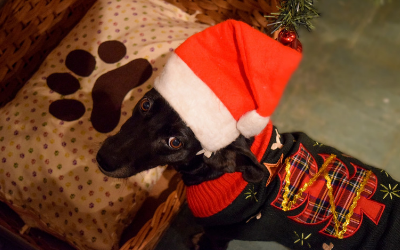 image for Holiday Gifts for Pets